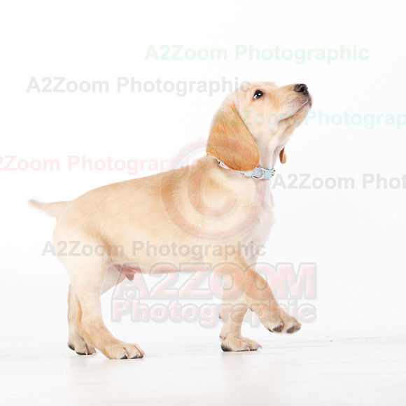Dylan.... 