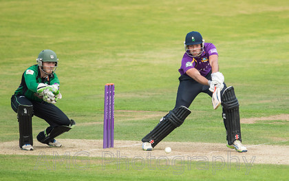 Yorkshire v Worcestershire - 7th August 2014